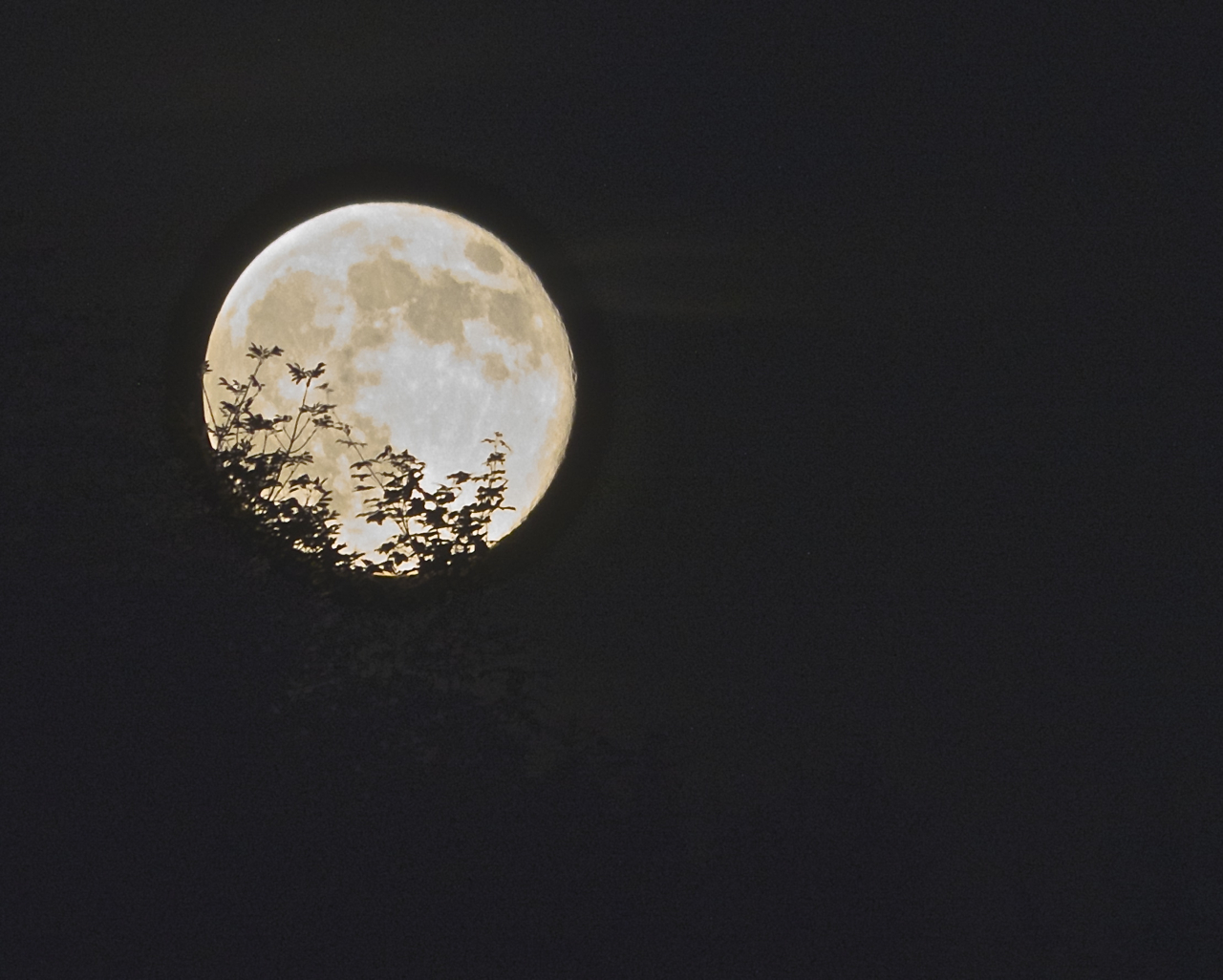 moon-over-trees