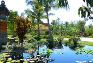 Asian Garden Pond