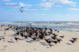 birds_parasurfer-1-1200