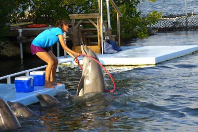 dolphin_hulahoop