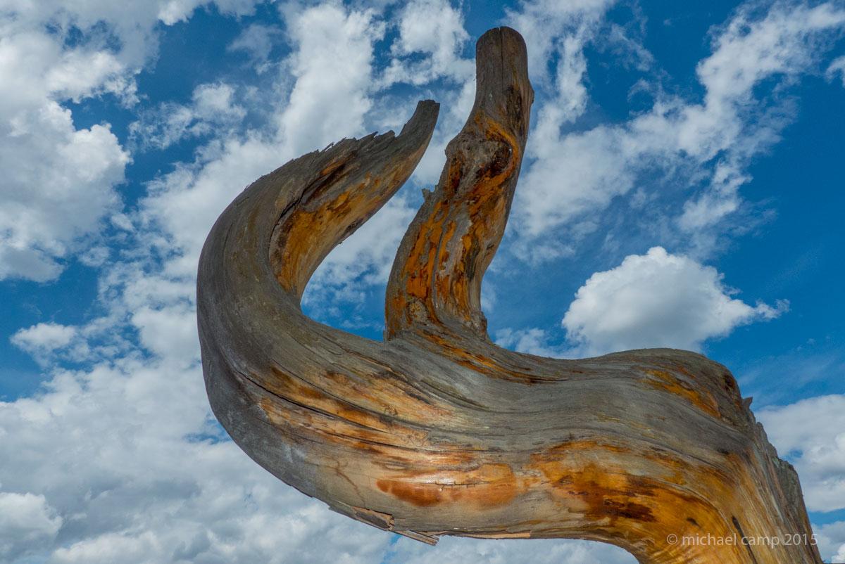 wood-1-sfw